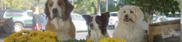 The Most-Liked Ads of Super Bowl 50