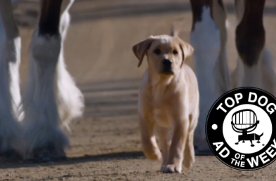 Budweiser Blows Up the Beer Category With Puppies and Microsoft Wows With High Scores