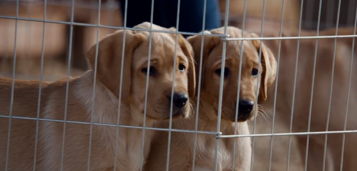 Top Performing Ads Strike a Chord with America