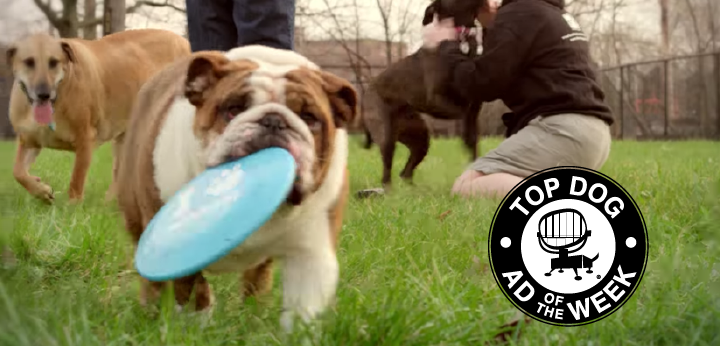 PetSmart and Tide Inspire Us to Save Lives and Clean 225 Dirty Things