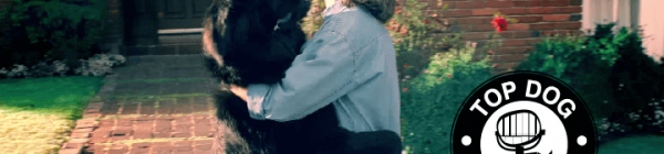 How Petco & Intel Successfully Use Animals and Humor