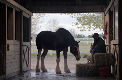 Top Ads of Q1 Feature Animals, Empowerment and Love