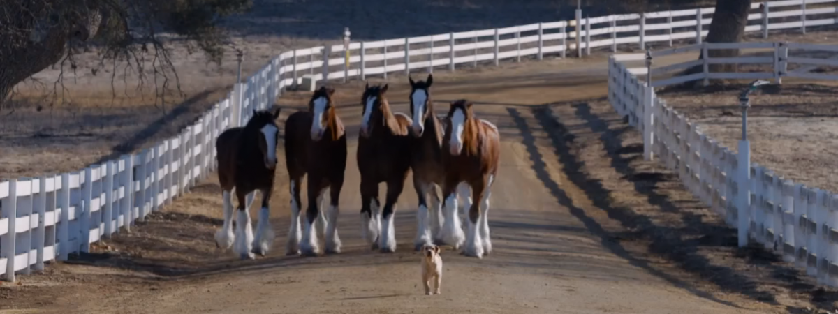Ace Metrix Announces Top 25 Most Liked Super Bowl Ads of the Past Five Years