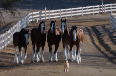 Going for Emotional Impact with Your Super Bowl Ad? Here's What Worked for Past Advertisers