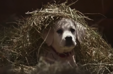 Budweiser's Best Super Bowl Ads From the Last Decade